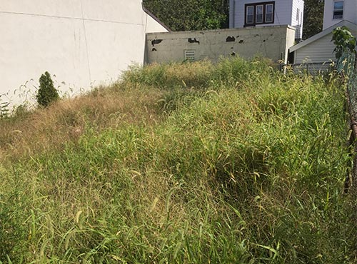 Backyard grass and weeds removal in New York City (before)